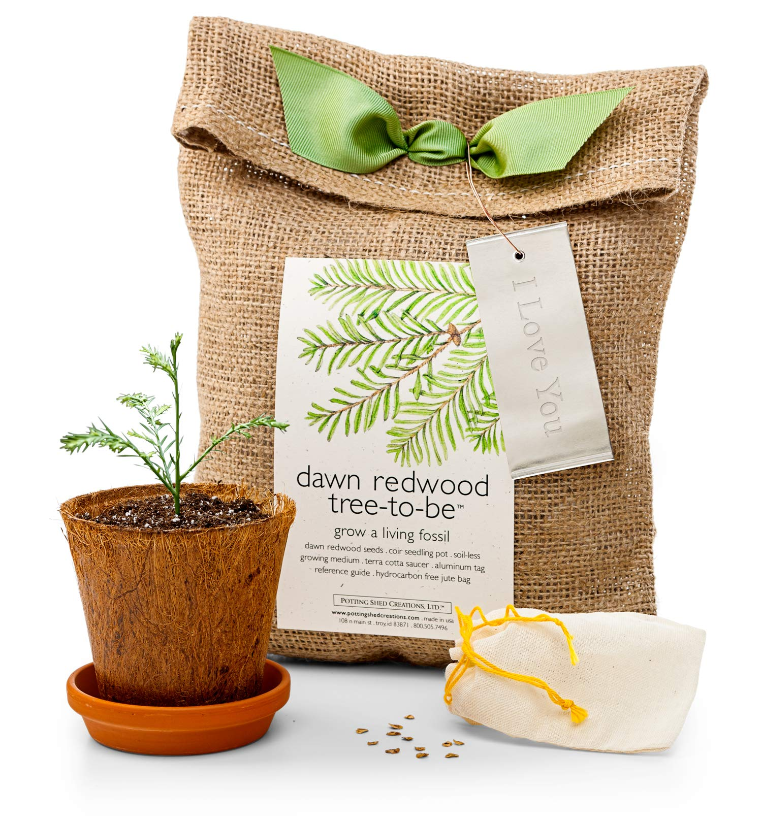 GiftTree Personalized Dawn Redwood Tree-to-Be Growing Kit | Indoor/Outdoor | Grows Up to 2 ft per Year | Great Gift for Graduation, Birthday, Kids and Teens by GiftTree