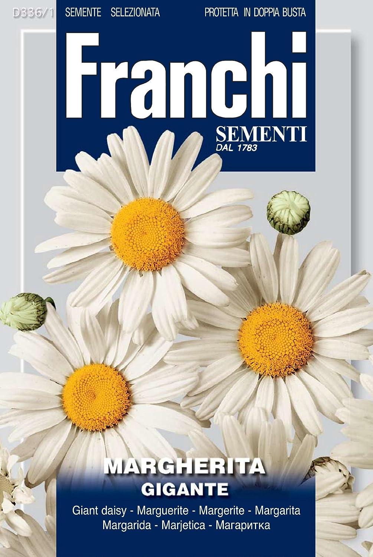 Franchi Margherita Gigante Mageriten-Samen, italienische Aufschrift Seeds of Italy Ltd