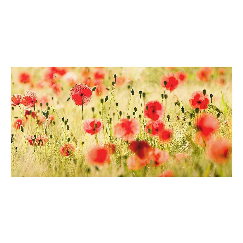Bilderwelten Cré dence en Verre - Summer Poppies - Paysage 1:2, Peinture Murale revetement Mural Cuisine dosseret de Cuisine Impression sur Verre Fond de Cuisine, Dimension: 40cm x 80cm PPS. Imaging GmbH