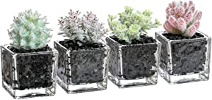 3 Inches Artificial Assorted Mini Succulent Plants in Square Glass Planters,Faux Plants for Home and Office Decor, Set of 4