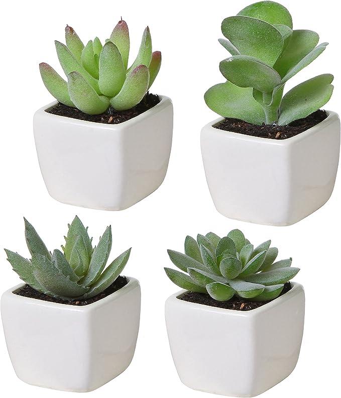 Macetas para cactushttps://amzn.to/2XZFPpI