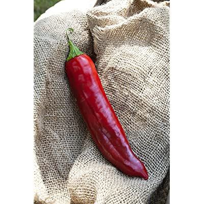 Big Jim Numex New Mexico Hot Pepper Premium Seed Packet + More : Garden & Outdoor