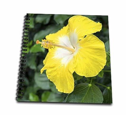 Amazoncom 3drose Danita Delimont Flowers Bonaire Wind