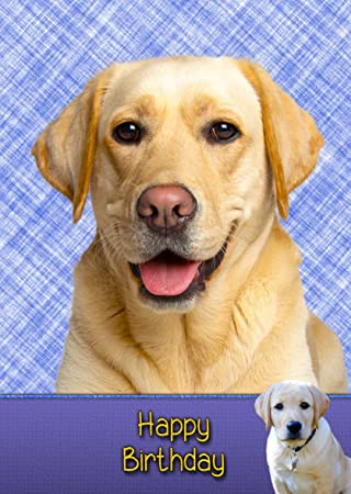 Golden Labrador Birthday Card 8quotx55quot Mix Match On 8quot