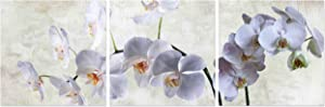 Natural art Modern Canvas Prints Paintings Printed Artwork with Wooden Frame for Wall Decor (12x12inx3pcs, White Phalaenopsis)
