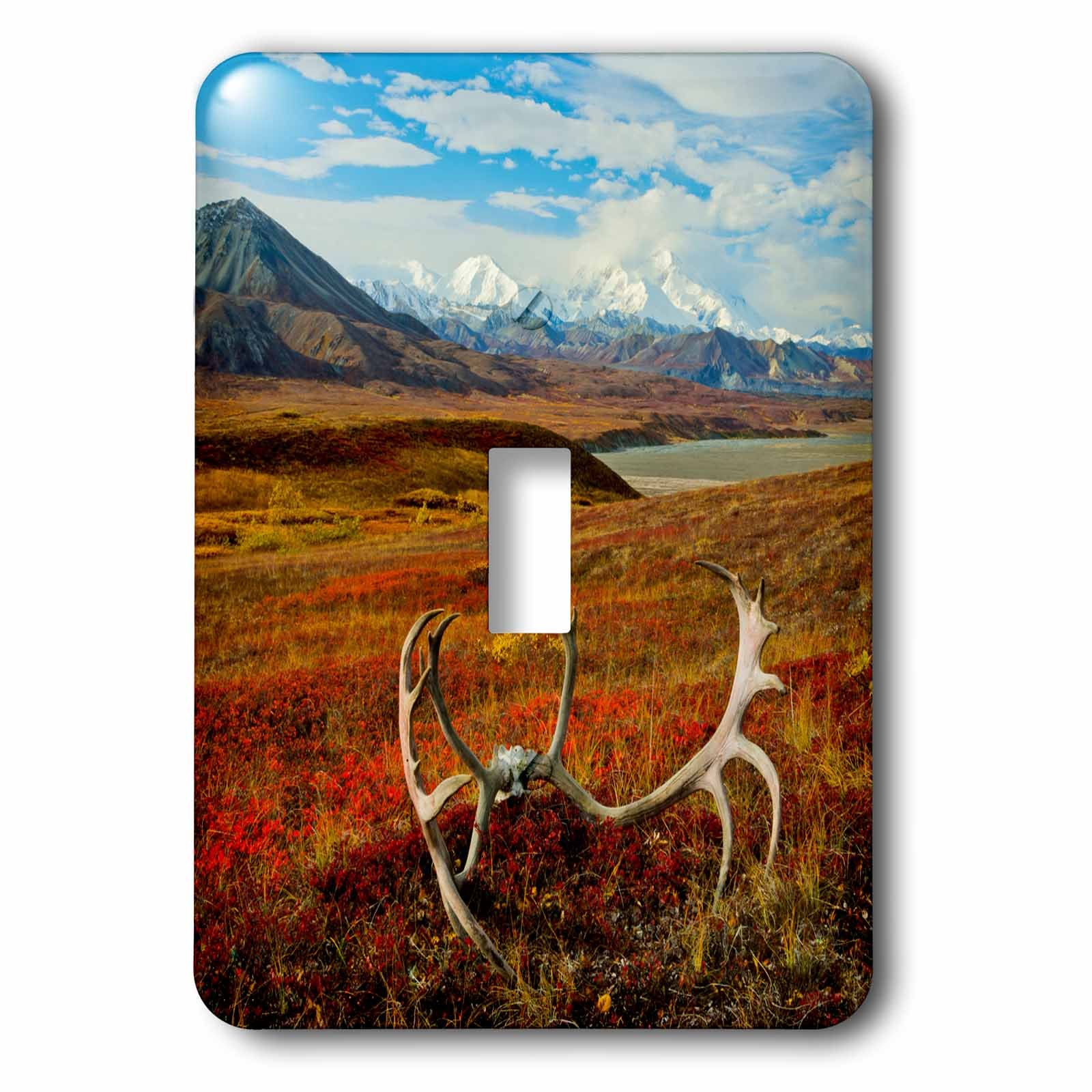 3dRose lsp_191066_1 Caribou Antlers on The Alaskan Tundra, Denali Np, Alaska, Usa Light Switch Cover by 3dRose
