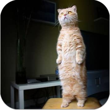Image of: Youtube What Other Items Do Customers Buy After Viewing This Item Top Funny Cat Videos Amazoncom Amazoncom Funny Cat Videos Appstore For Android
