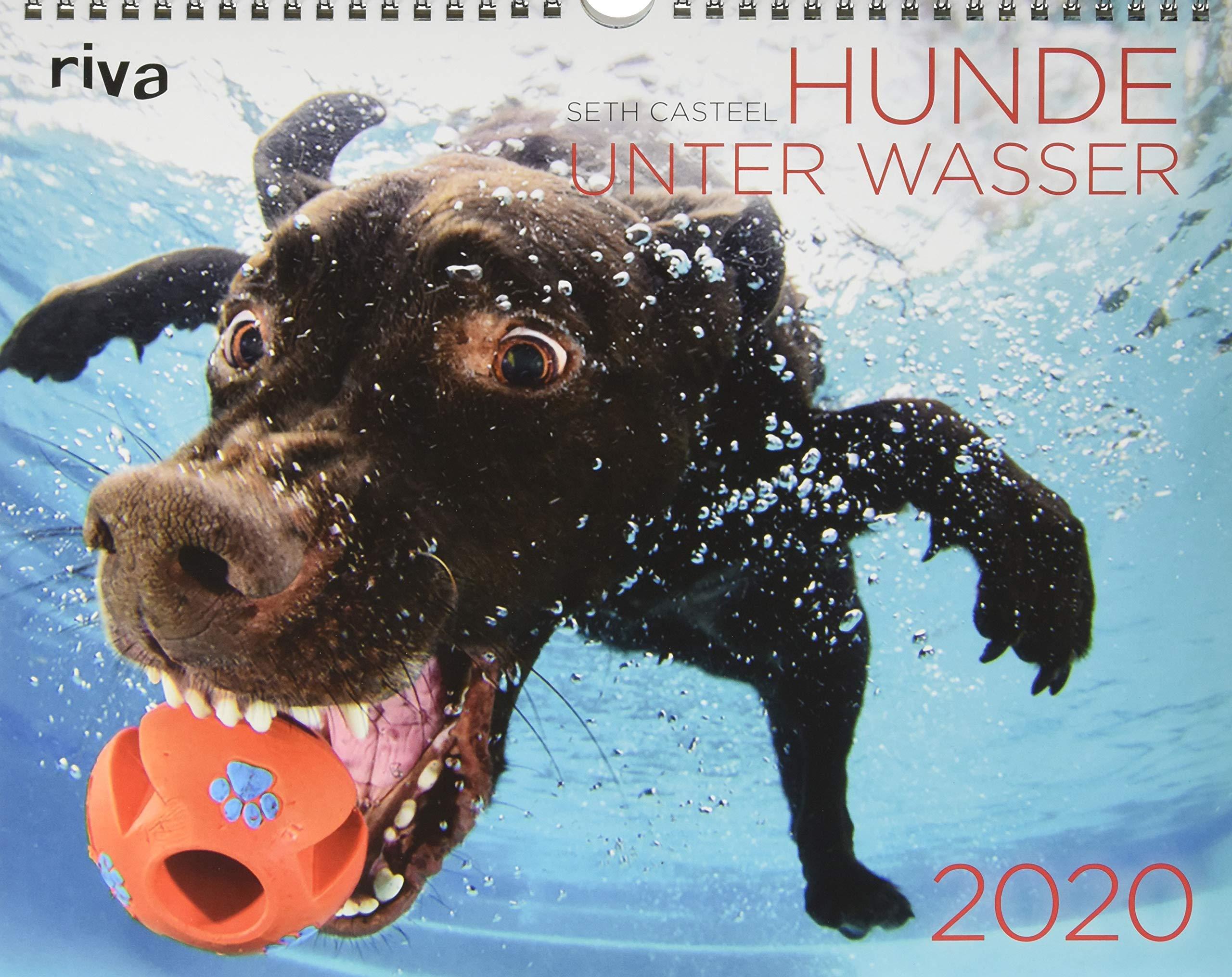 Hunde Unter Wasser 2020  Wandkalender