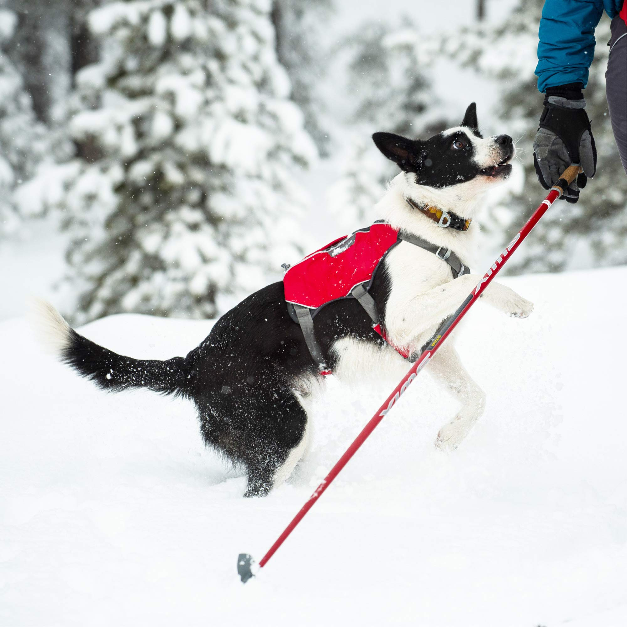 RUFFWEAR - Web Master Pro Dog Harness, Search and Rescue, Service Dogs, Snowboarding, Skiing, Everyday Wear, Red Currant, Small by RUFFWEAR (Image #10)
