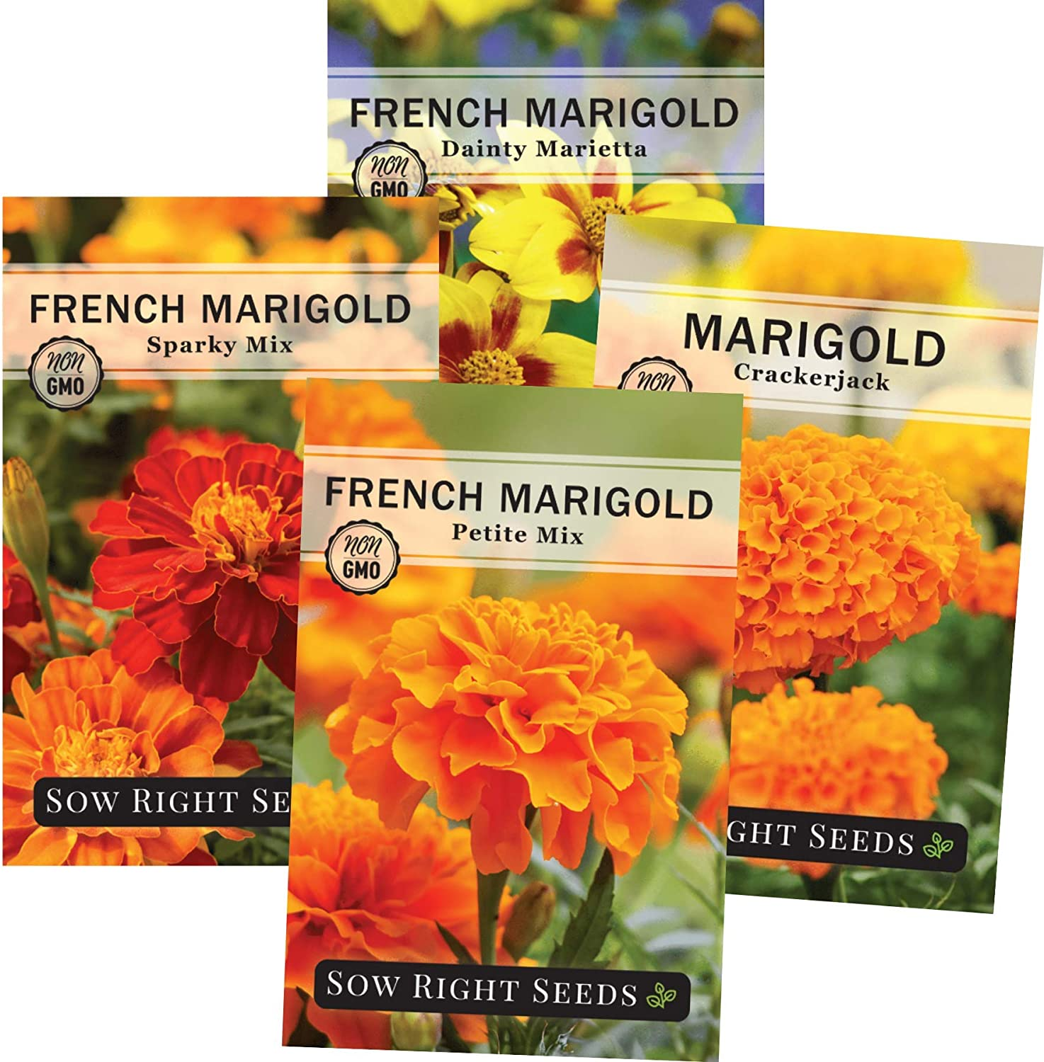 Amazon Com Sow Right Seeds Marigold Seed Collection For