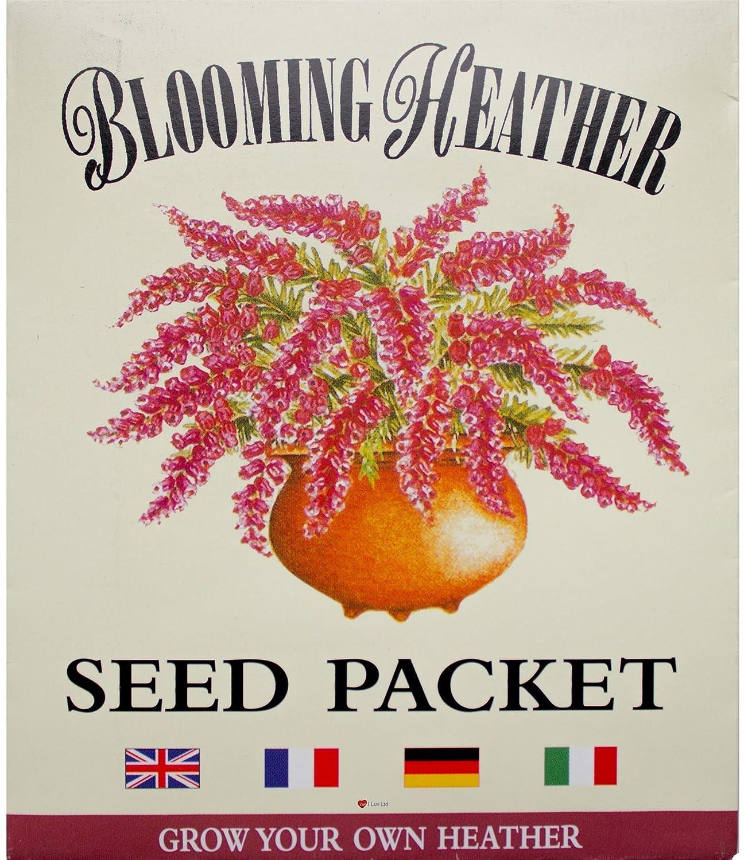 Scottish Heather Seeds Purple Flowered Perennial Grow Heather Seeds Packet I Luv LTD
