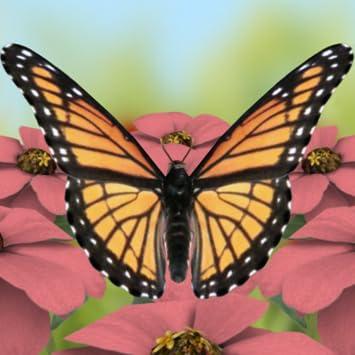 Amazon Com Beautiful Butterflies Live Wallpaper Free Appstore