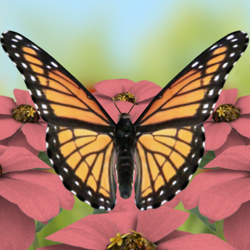 Beautiful Butterflies Live - Wallpaper Animated