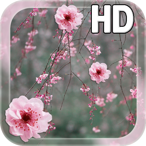 Cherry Blossom LWP