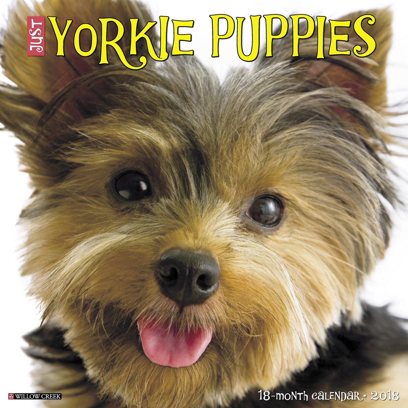 Free Yorkshire Terrier On-Line Course Yorkie