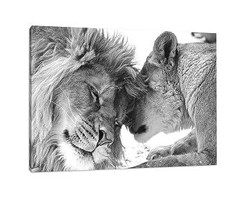 Schönes Bezauberndes Kuschelndes Löwenpaar In Afrika In Der Savanne Schwarz Weiß Auf Leinwand Xxl Riesige Bilder Fertig Gerahmt Mit Keilrahmen Kein