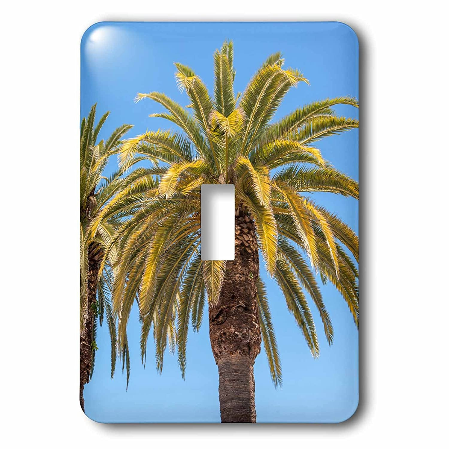 Tierra Verde Florida palm trees Single Toggle Switch 3dRose lsp/_205668/_1 USA