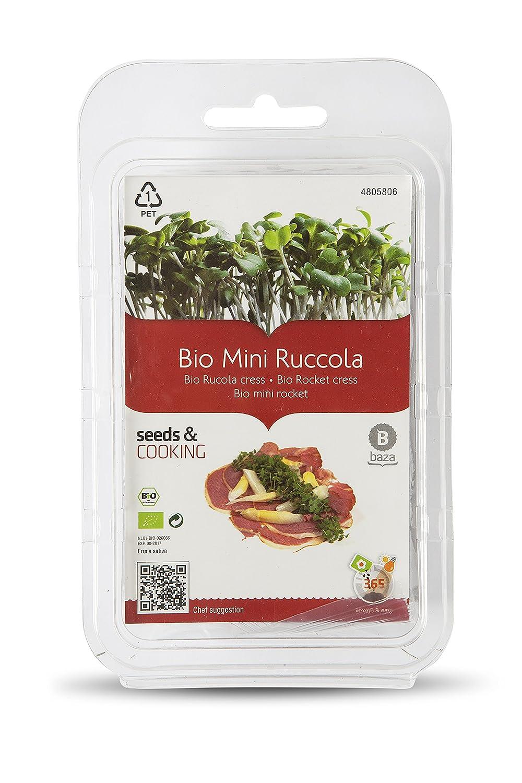 Kit de Cultivo Brotes de Rú cula BIO ( Semillas Ecologicas Certificadas ) BAZA