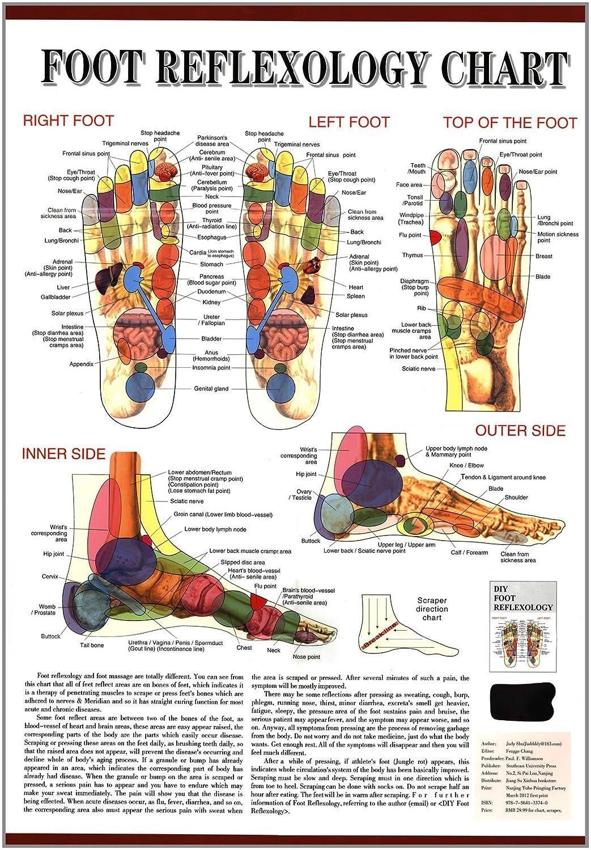 Foot Reflexology Chart Laminated Science Kits Massage Diagram Industrial Scientific