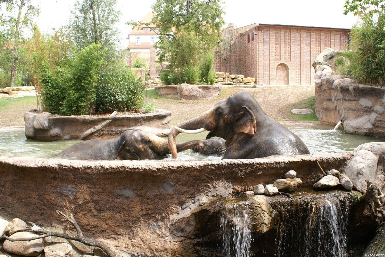 Eintrittskarten f/ür den Zoo Leipzig erleben 2 Tage St/ädtereise im Charlys Leipzig inkl Hotelgutschein Gutschein Kurzreise Kurzurlaub Reise Geschenk Reiseschein