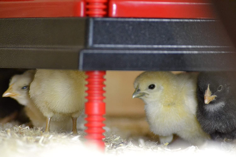 22 Watts RentACoop Chick Heating Plate Warms 20 Chicks 12 x 12