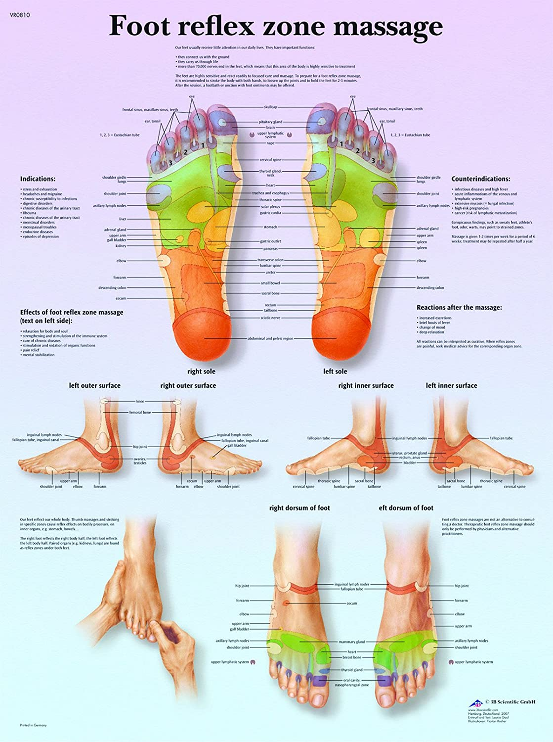 Amazon.com: Laminated Anatomical Charts - Foot Mage ... on foot odor, foot index, foot and ankle, foot pain, foot structure, foot schematic, foot problems, foot regions, foot type chart, foot outline, foot assessment form, foot tendons, foot cartoon, arches of the foot, joints of foot, foot parts, anatomical terms of location, foot muscles, foot side view, foot map, foot bones, foot drawing, fifth toe, foot toes,