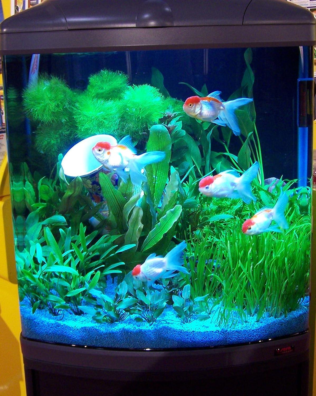 Sera 31150 Mondi Biotop Cube 130 XXL un 130 L Agua dulce de Acuario Completo con pl de T5 iluminación y Filtración.: Amazon.es: Productos para mascotas