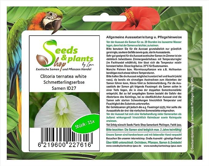 15 Clitoria ternatea blanco semillas jardín de arbusto del ...