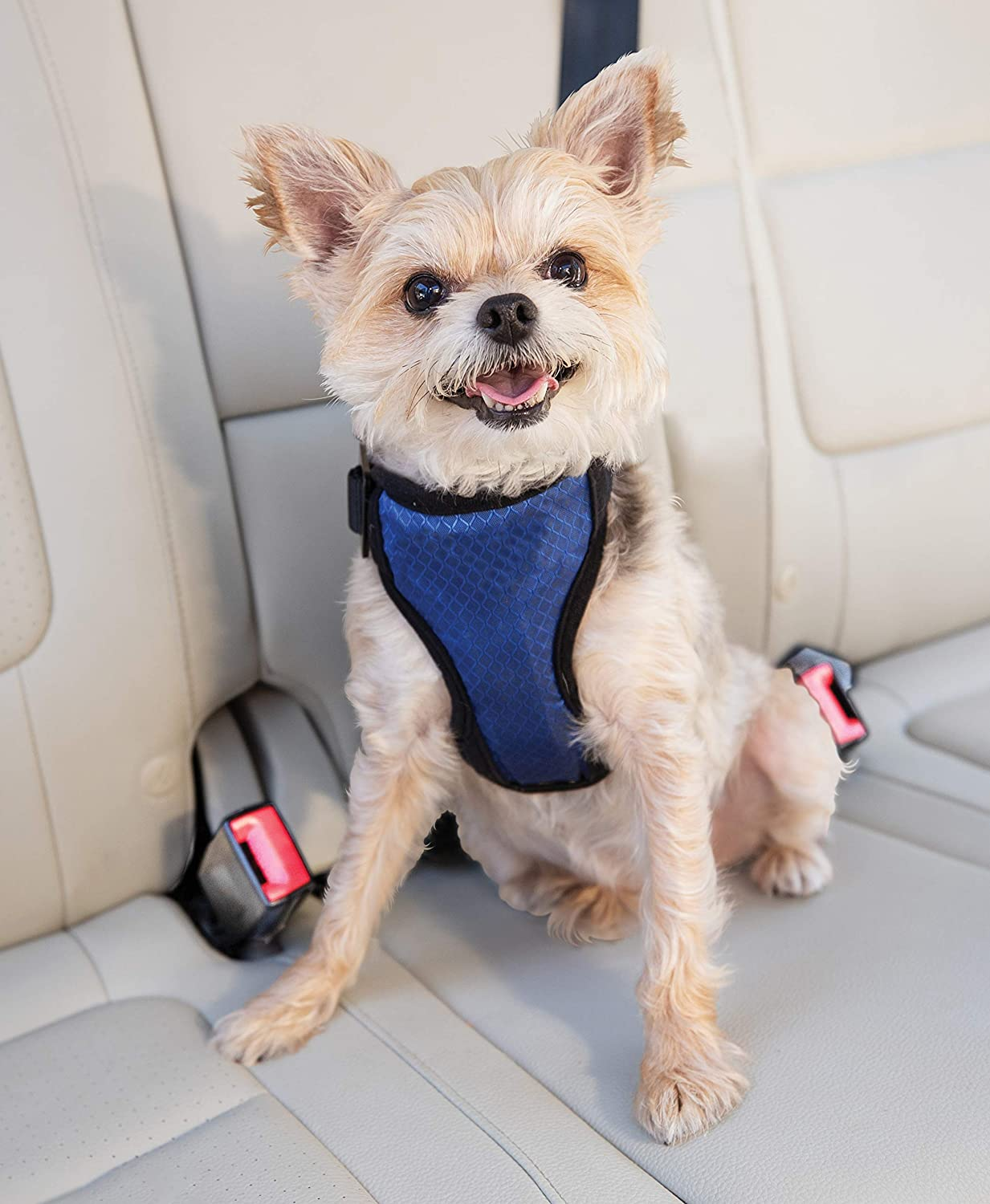 PetSafe Deluxe Car Harness for Dogs