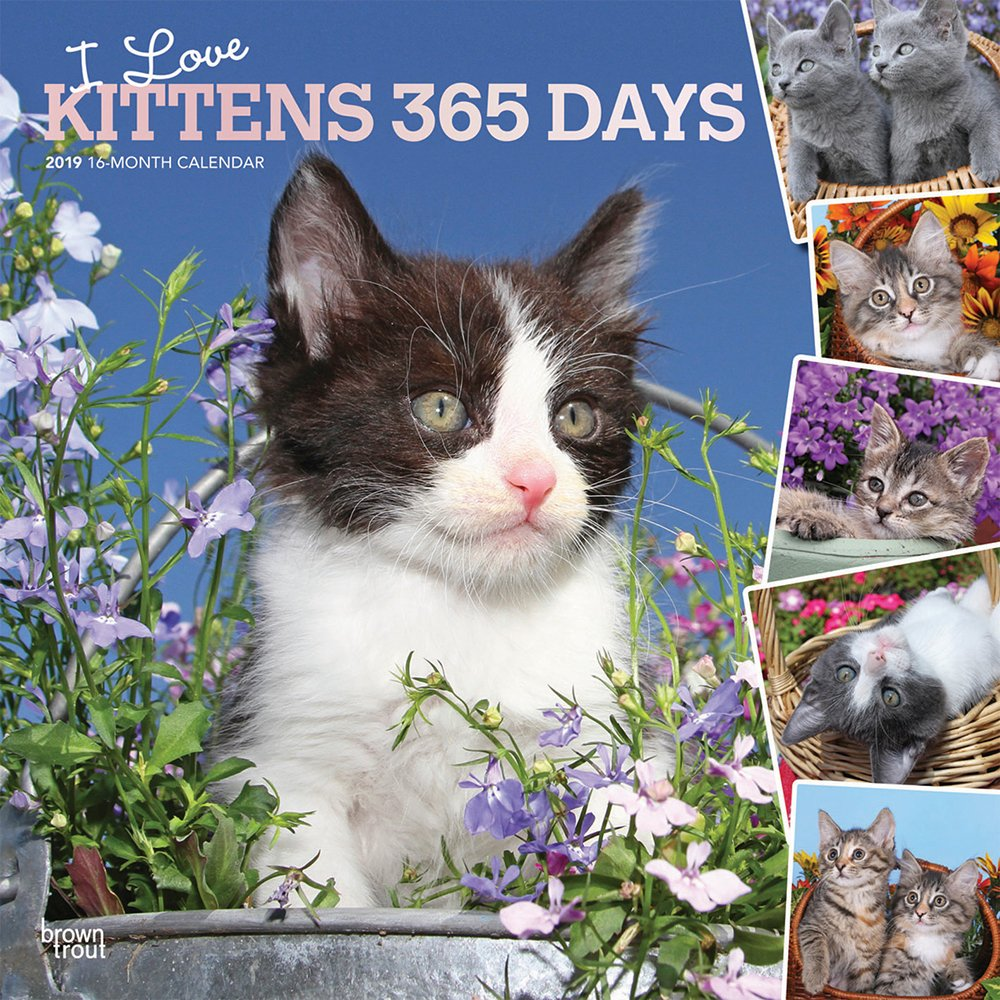 I Love Kittens 365 Days 2019 12 x 12 Inch Monthly Square Wall Calendar with Foil Stamped Cover, Animals Cats Kittens Feline