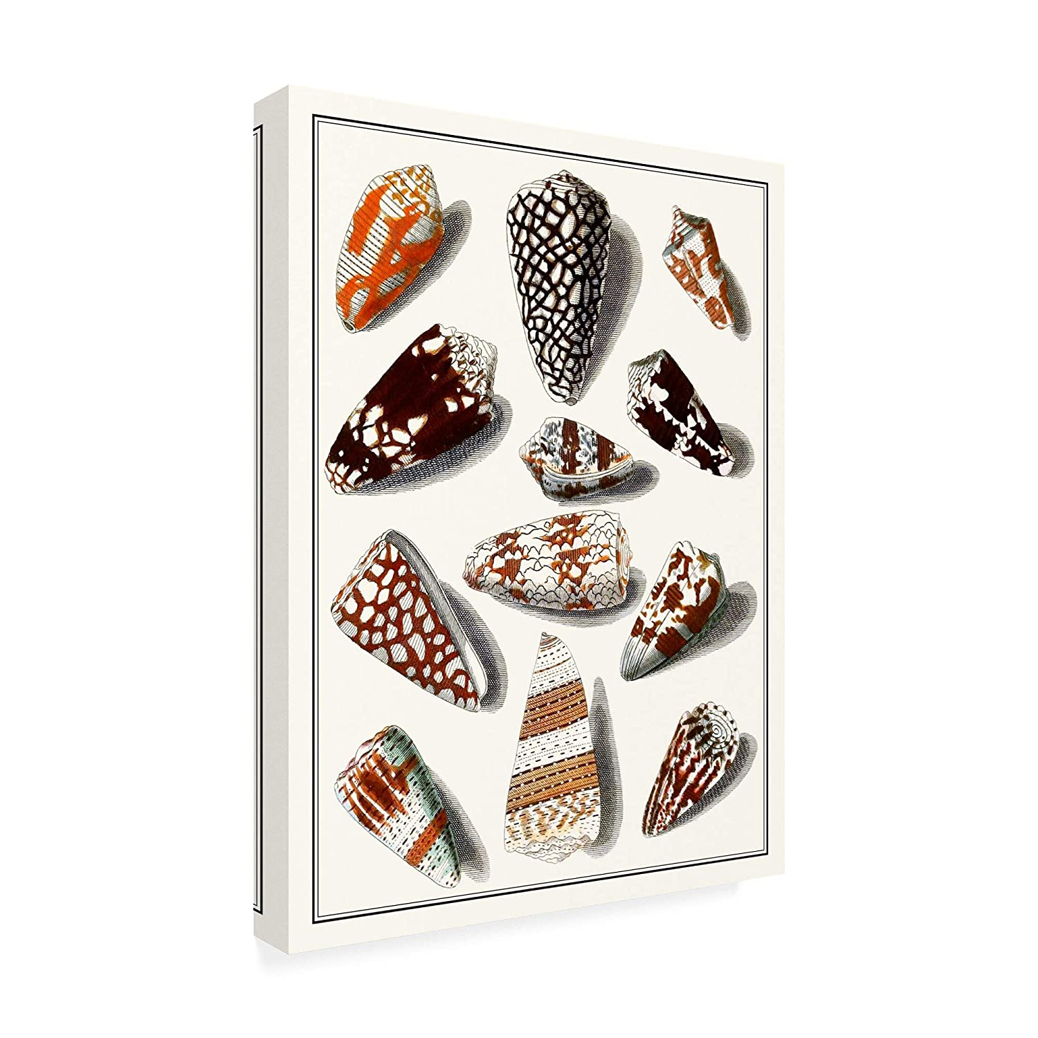 Amazon.com: Trademark Fine Art Collected Shells V by Vision Studio, 18x24: Home & Kitchen