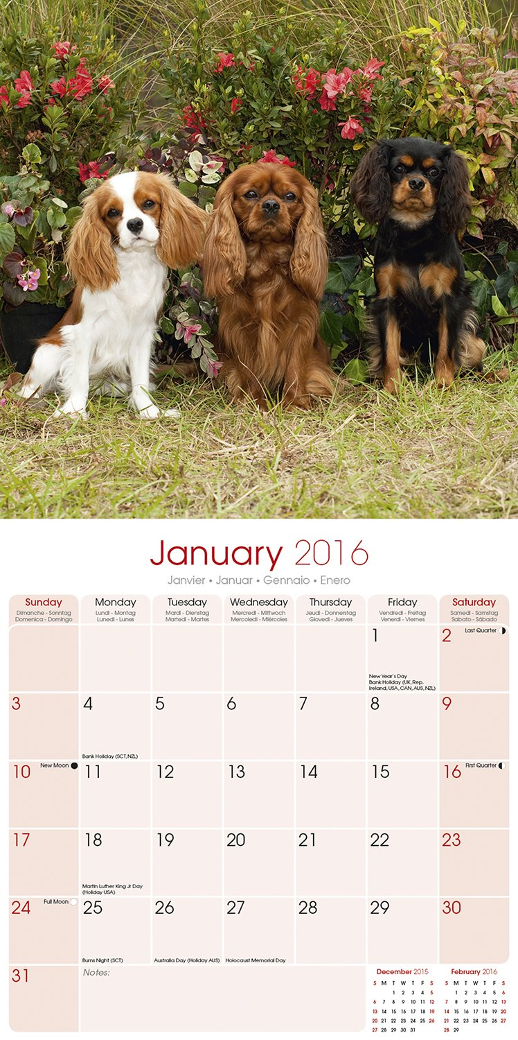 Cavalier king charles spaniel calendar 2017 dog breed calendars cavalier king charles spaniel calendar 2017 dog breed calendars 2016 2017 wall calendars 16 month by avonside megacalendars 9781782087472 nvjuhfo Image collections