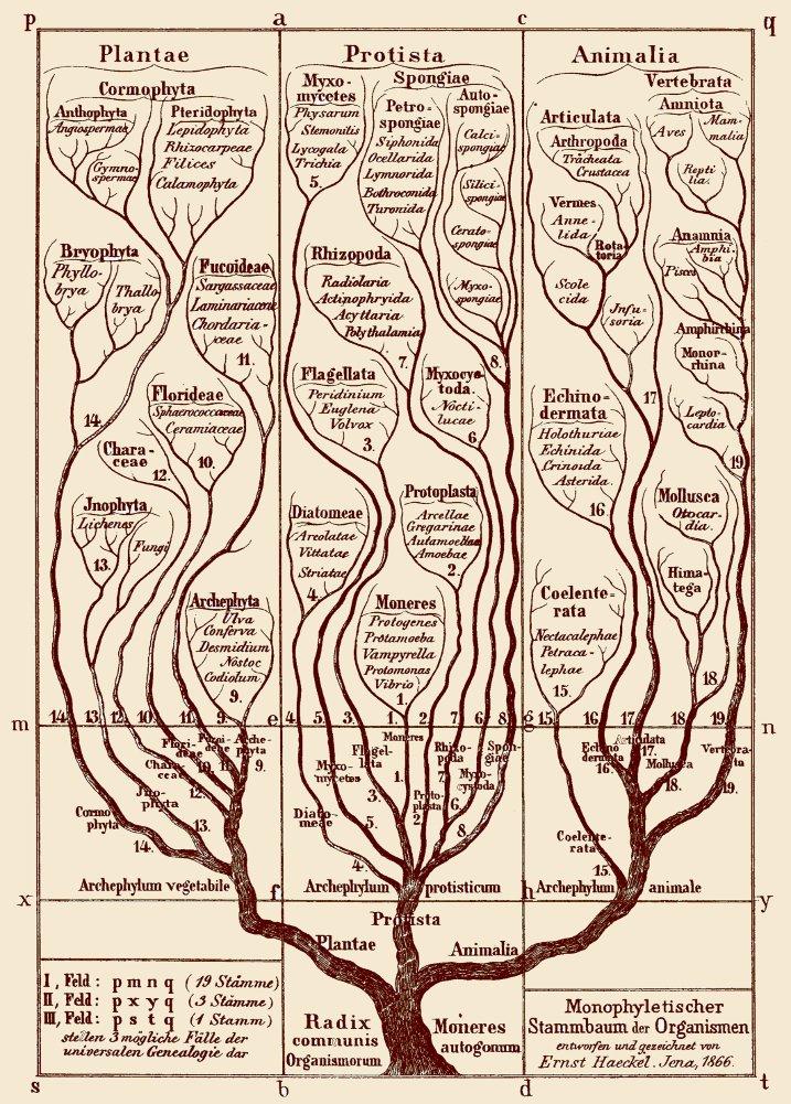 Amazon.de: Vintage Anatomie Allgemeine Morphologie der Organismen ...