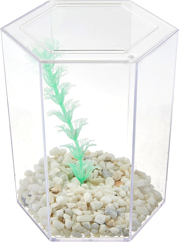 A Perfect 1st Fish Tank For Children Penn Plax Rite-Bite Educational Tank For a Betta Education