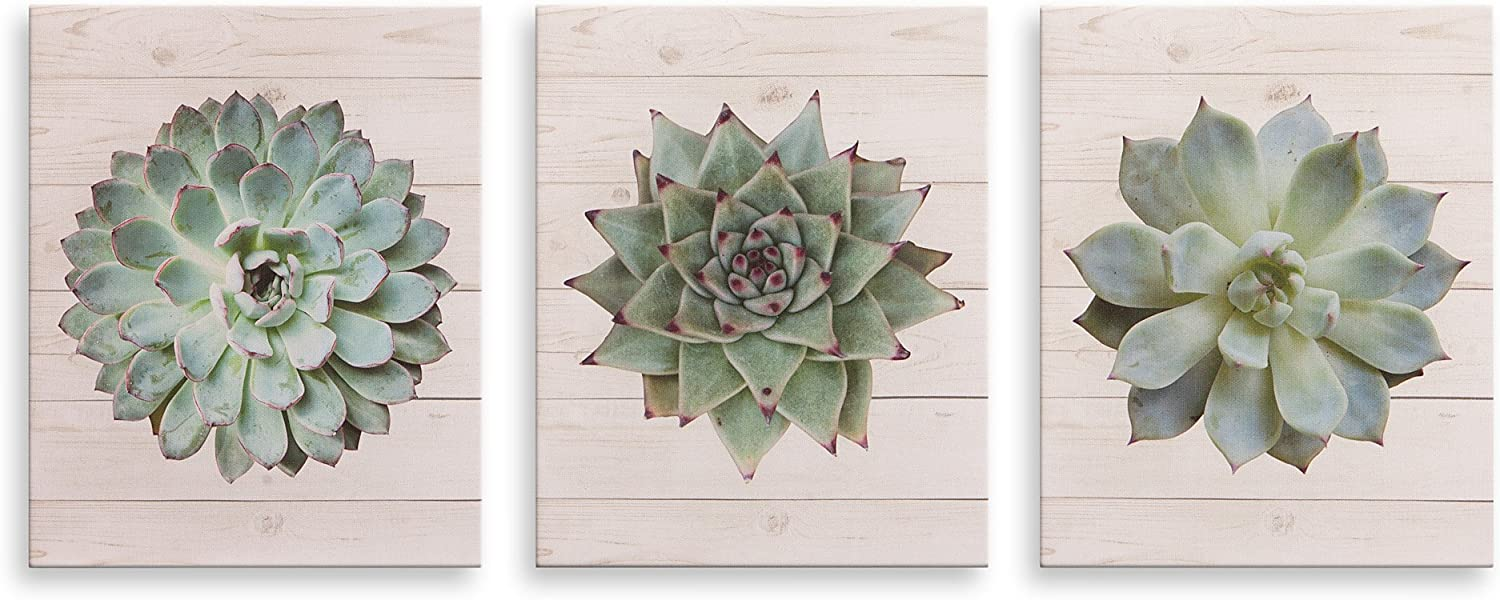 """Patton Wall Décor Succulents on Wood Painting, Set of 3 Canvas Wall Art Set, 8"""" x 10"""""""