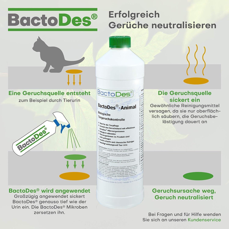 Liebenswert Farb Geruch Neutralisieren Ideen Von Bactodes Animal -1 Liter Tier-geruchsentferner, Geruchskiller-konzentrat Zum