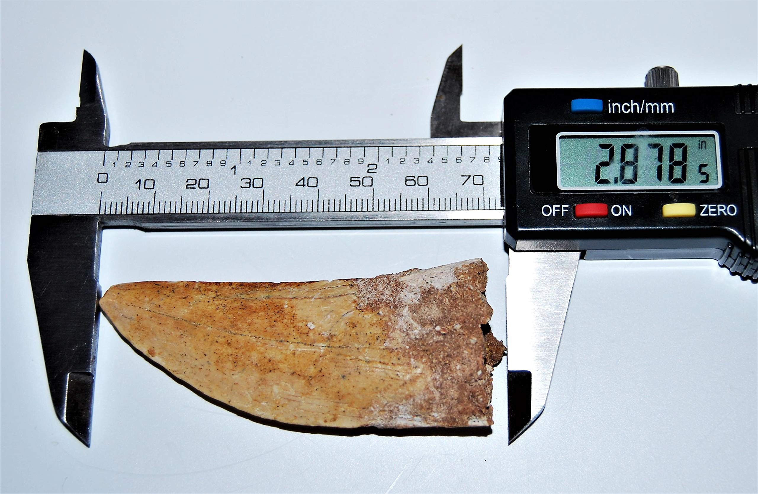 Carcharodontosaurus Dinosaur Tooth 2.878'' Fossil African T-Rex LDB #14167 15o by Fossils, Meteorites, & More (Image #4)