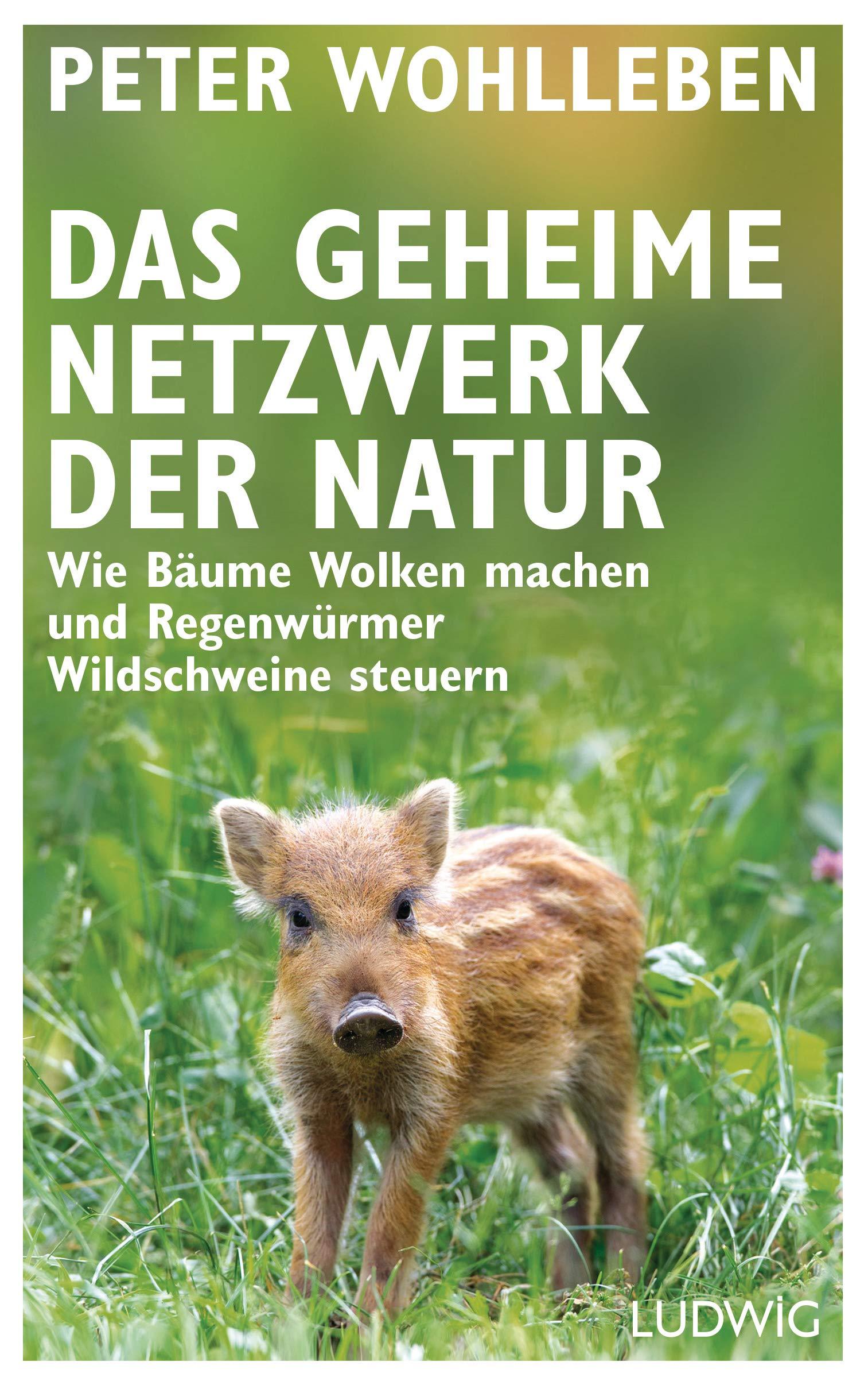 Das Geheime Netzwerk Der Natur  Wie Bäume Wolken Machen Und Regenwürmer Wildschweine Steuern