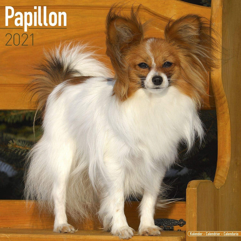 Get Papillion Dog Picture  Pics