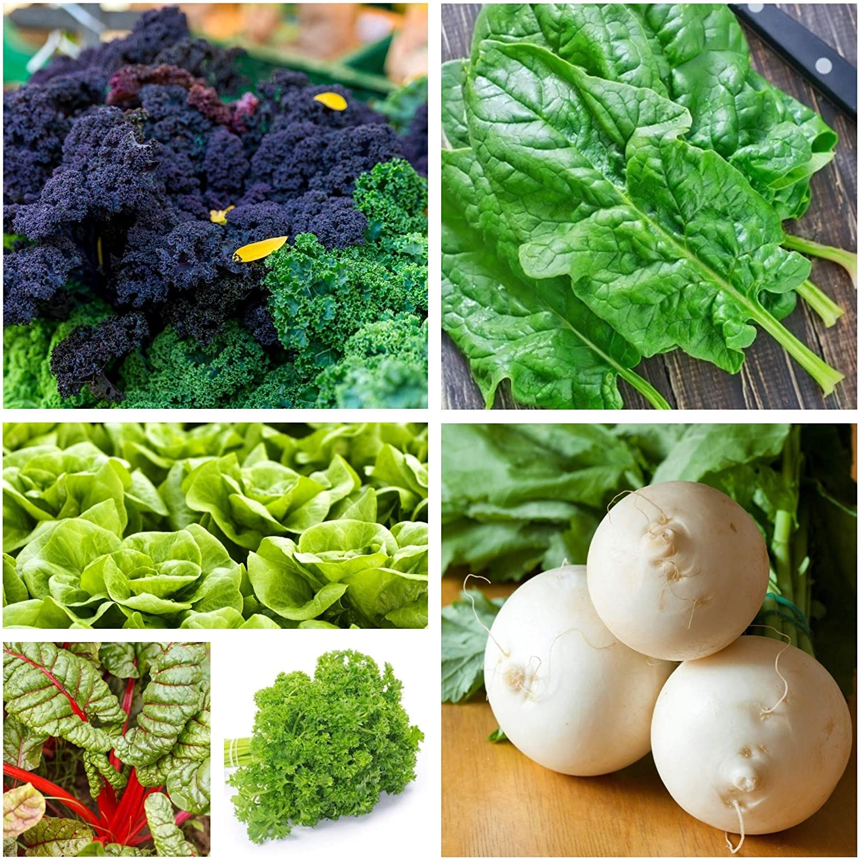 Vegetable Island 2: semillas de 6 especies vegetales responsables ...