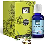 Speaking Tree 100% Pure, Natural and Undiluted Eucalyptus Essential Oil, 30ml with Roller