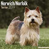 Norwich/Norfolk Terrier Calendar 2019