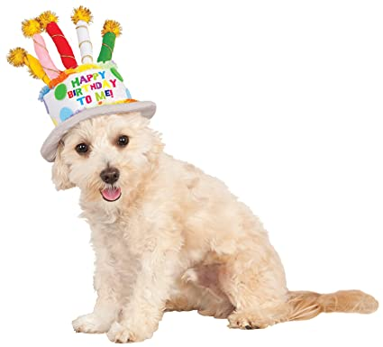 Birthday Cake Hat For Pet Medium Large