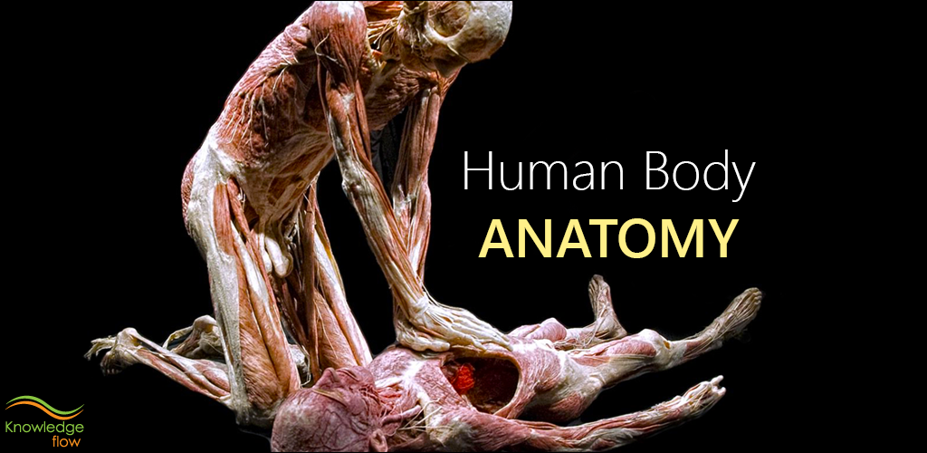 Amazon.com: Human Body Anatomy: Appstore for Android