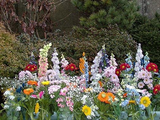 Inter Home Tapis De Fleurs Jardin Parc Jardinerie 30 Variétés Et 2500 Graines