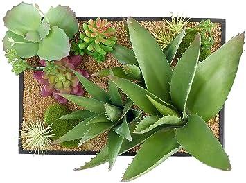 Tableau Végétal Avec Cadre Succulentes 30 X 20 Cm Amazonfr