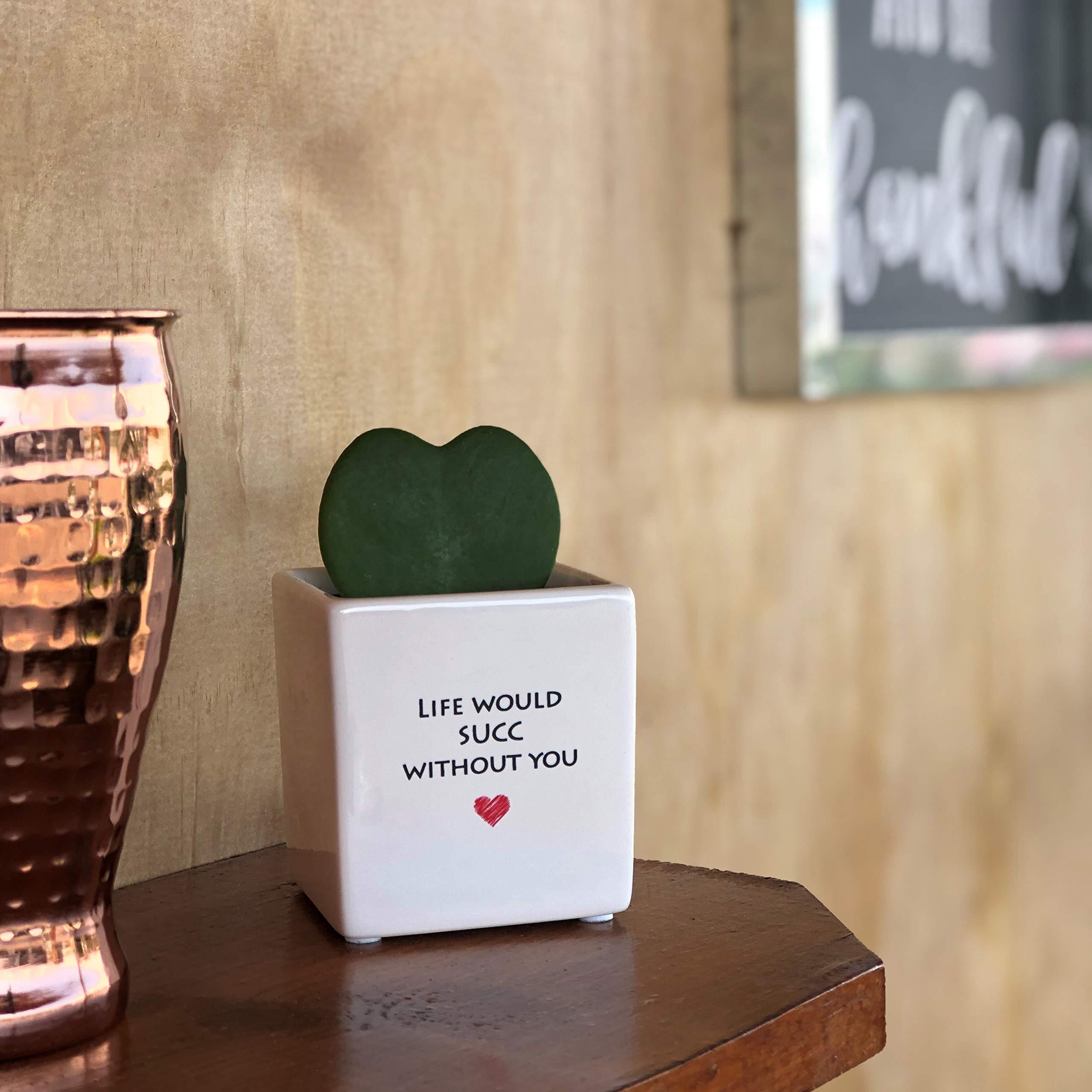 Costa Farms Live Hoya Heart, Succulent-Like Plant, Hoya Kerrii, in Life Heart White Ceramic by Costa Farms (Image #2)