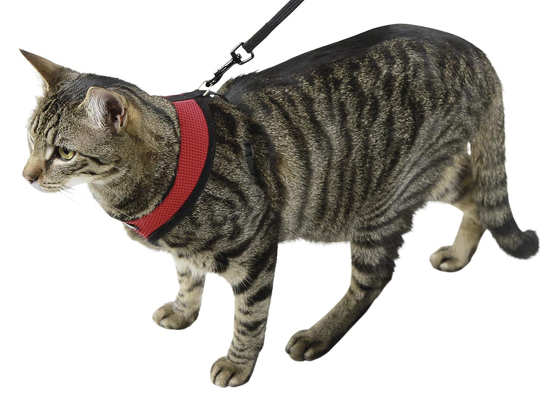 Kerbl Arnés para gatos Active rojo con correa 120 cm: Amazon.es: Productos para mascotas