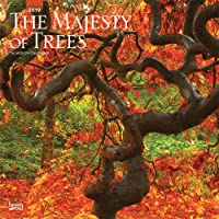 Majesty of Trees, The 2019 Square Wall Calendar
