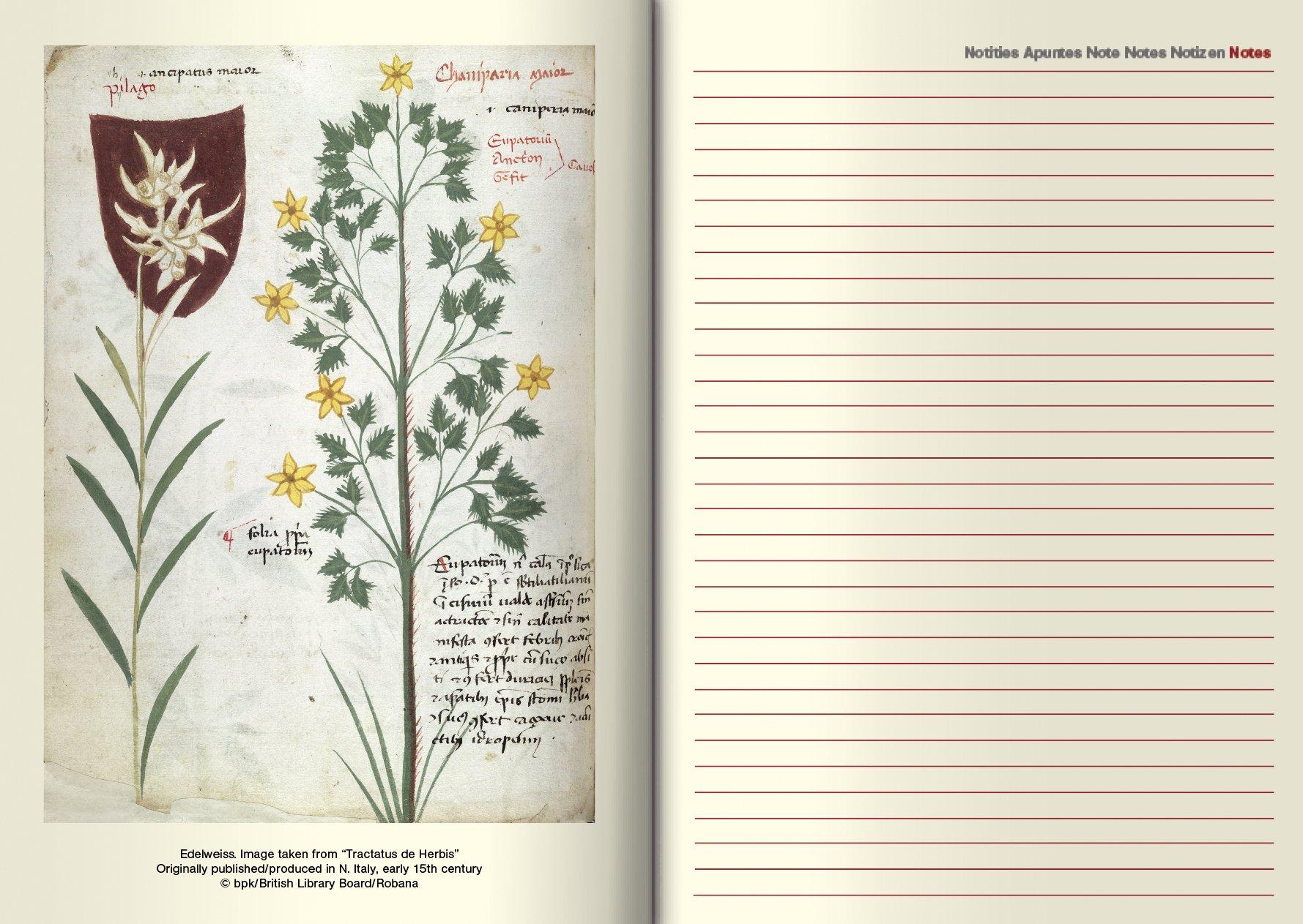 2017 Antique Books Diary - teNeues Large Magneto Diary - 16 x 22cm:  Amazon.co.uk: teNeues: 4002725783837: Books